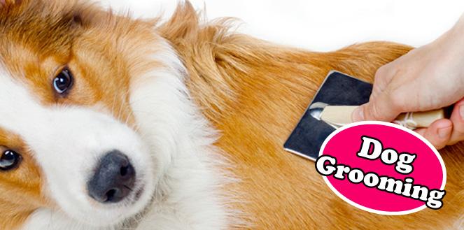 dog_grooming_epsom2