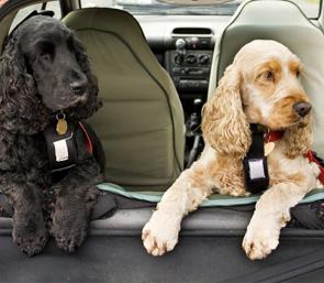 Dog Pet Taxi