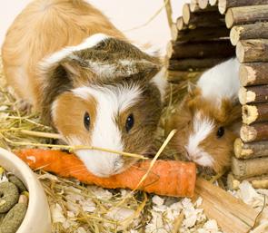 Small Animal Daily Feeding Visits