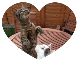 cat care epsom testimonial heart