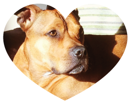 staffy_testimonial_heart